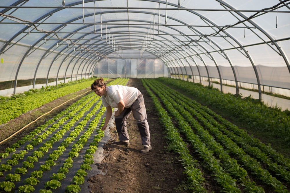 Reportage Handibio 65 Naio Technologies Temps travail agricole 3