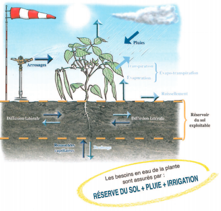 Irrigation - éléments hydriques