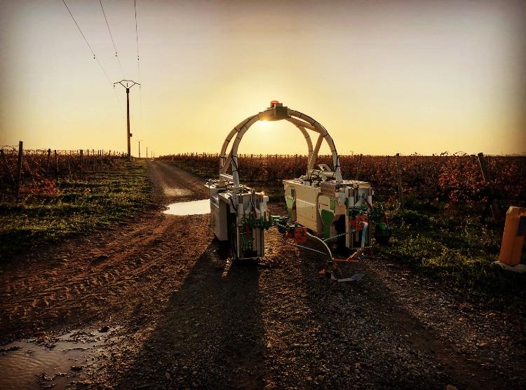 vine weeding robot